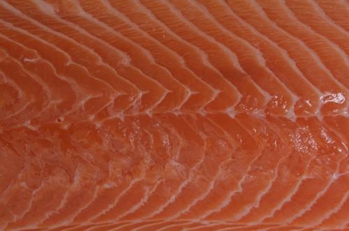 דג סלמון פרוס- דגים טריים